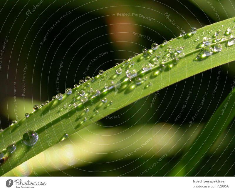 grashalm2 Wasser Wiese Regen Seil Halm