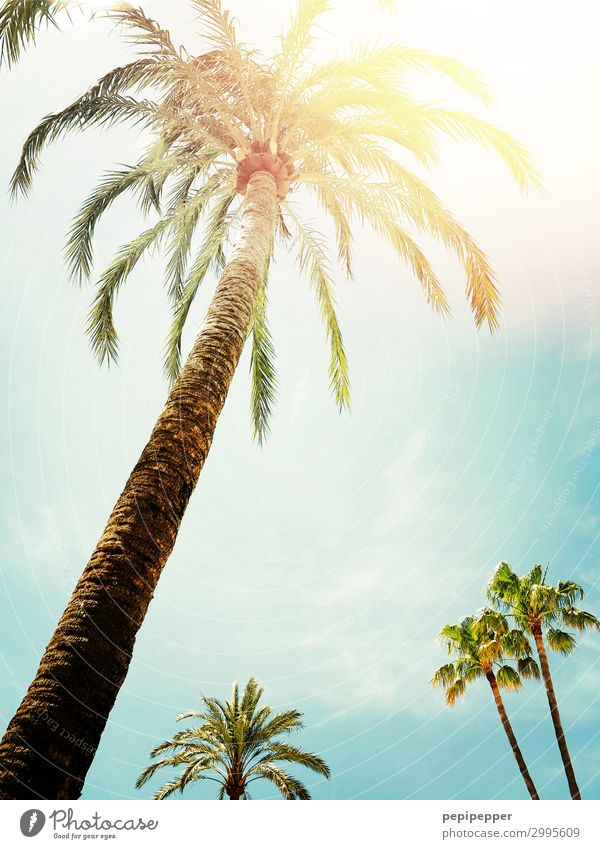 palmen Ferien & Urlaub & Reisen Tourismus Sommerurlaub Sonne Himmel Sonnenlicht Schönes Wetter Baum Grünpflanze Wildpflanze exotisch Palme Holz blau gelb grün