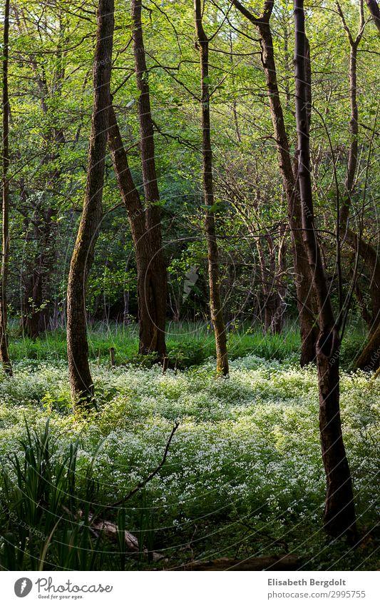 Blühender Wald Umwelt Natur Landschaft Pflanze Frühling Schönes Wetter Baum Blume Gras Sträucher Blüte Grünpflanze Wildpflanze Wachstum natürlich schön Wärme