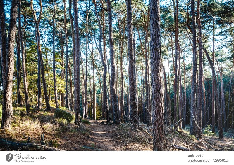 im Wald Wellness Leben Wohlgefühl Sinnesorgane Erholung ruhig Meditation Duft Ausflug wandern Umwelt Natur Landschaft Pflanze Sonne Frühling Sommer Herbst