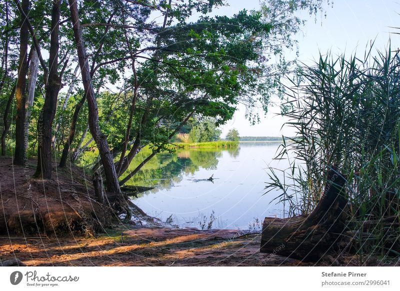 Rothsee harmonisch Erholung ruhig Meditation Schwimmen & Baden Ferien & Urlaub & Reisen Ausflug Freiheit Camping Sommer Sommerurlaub Sonne Sonnenbad Strand