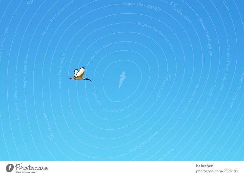 isolation | allein Himmel Ferien & Urlaub & Reisen blau Meer Tier Einsamkeit Ferne Strand Tourismus außergewöhnlich Freiheit Vogel fliegen Ausflug Wildtier