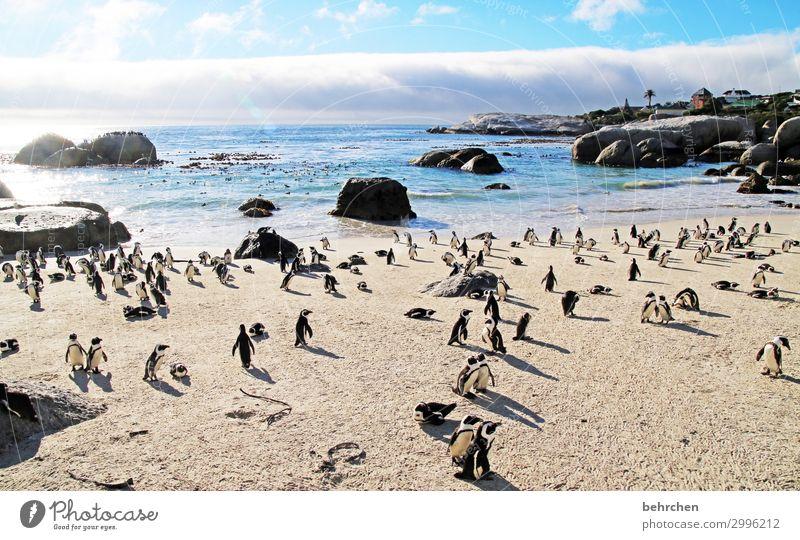 geräusch | pinguingeschnatter besonders genießen Natur Wasser Sehnsucht Felsen träumen Sonnenlicht Menschenleer Morgendämmerung Sonnenaufgang Wolken