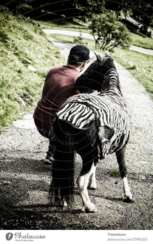 What The Hell Are You Doing? Ferien & Urlaub & Reisen maskulin 1 Mensch Umwelt Gras Sträucher Park Großbritannien Yorkshire Wege & Pfade Mütze Pferd Ponys Tier