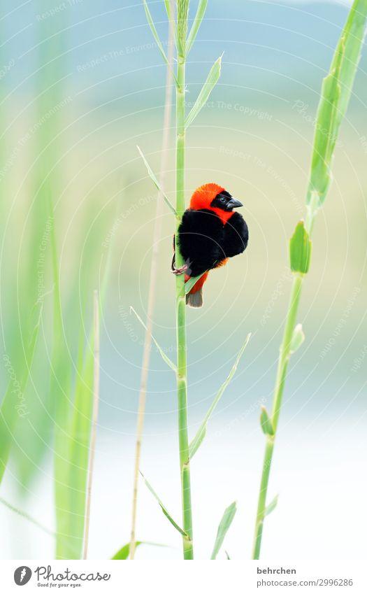 herzig Ferien & Urlaub & Reisen Tourismus Ausflug Abenteuer Ferne Freiheit Safari Natur Landschaft Seeufer Wildtier Vogel Tiergesicht Flügel oryxweber Feder