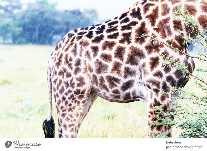 kopflos Ferien & Urlaub & Reisen Natur Tier Ferne Beine Tourismus außergewöhnlich Freiheit Ausflug Körper Wildtier Abenteuer Sträucher fantastisch groß Fernweh