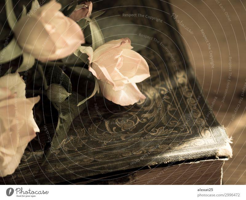 Altes Buch und Rosen schön Blume Blüte Papier alt Liebe retro rosa Romantik Antiquität Hintergrund schick schließen Entwurf romantisch Roséwein schäbig