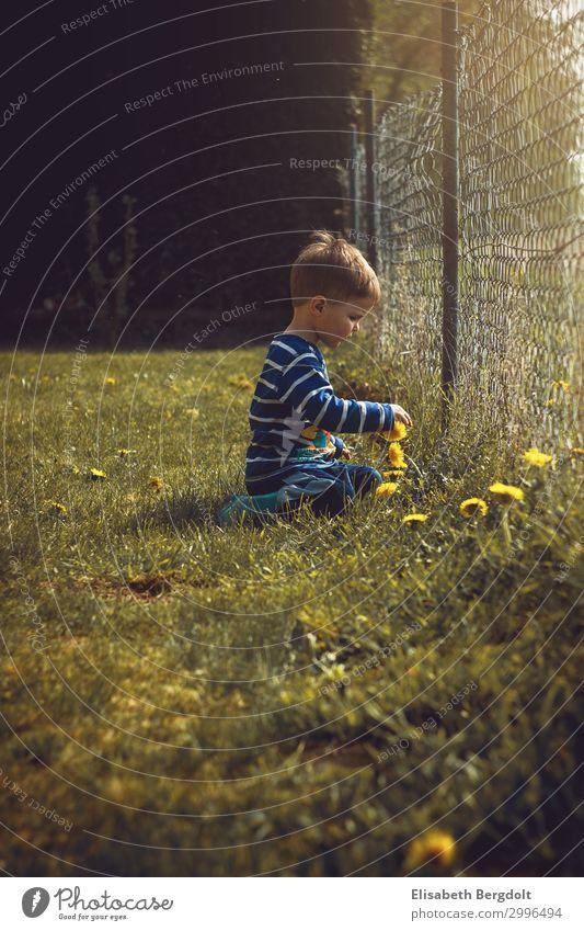 kleiner Junge pflückt im Garten Blumen blumen pflücken Kleinkind Sommer Sonne Kind Natur Schönes Wetter Pflanze Wiese beobachten entdecken sitzen träumen
