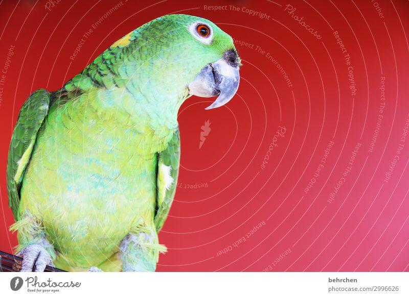buenos dias amigos:) Ferien & Urlaub & Reisen schön grün Tier Ferne lustig Tourismus außergewöhnlich Freiheit Vogel Ausflug Abenteuer Feder fantastisch Flügel