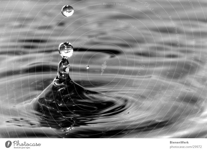 Tropfen Wasser Erholung ruhig Religion & Glaube See Zufriedenheit elegant Wellen Wassertropfen Kreis Beginn Gelassenheit Baumkrone Vulkankrater