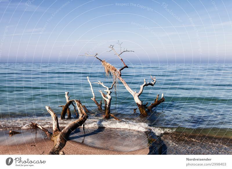 Weststrand ruhig Meditation Natur Landschaft Urelemente Sand Wasser Wolkenloser Himmel Schönes Wetter Nebel Baum Wellen Küste Strand Nordsee Ostsee Holz