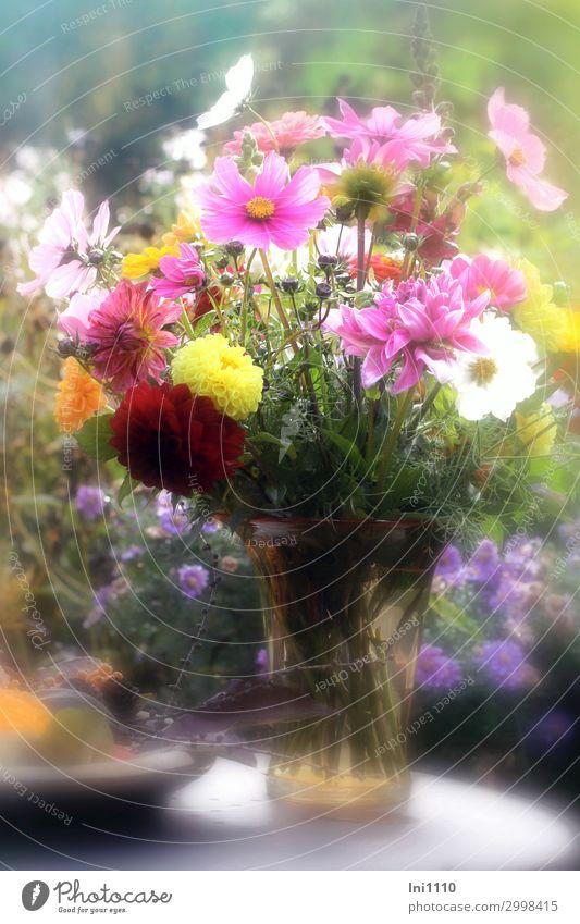 Herbststrauß in Glasvase Pflanze Schönes Wetter Blume Blatt Blüte Garten blau gelb grün orange rosa rot weiß Blumenstrauß Astern Dahlien Schmuckkörbchen Vase