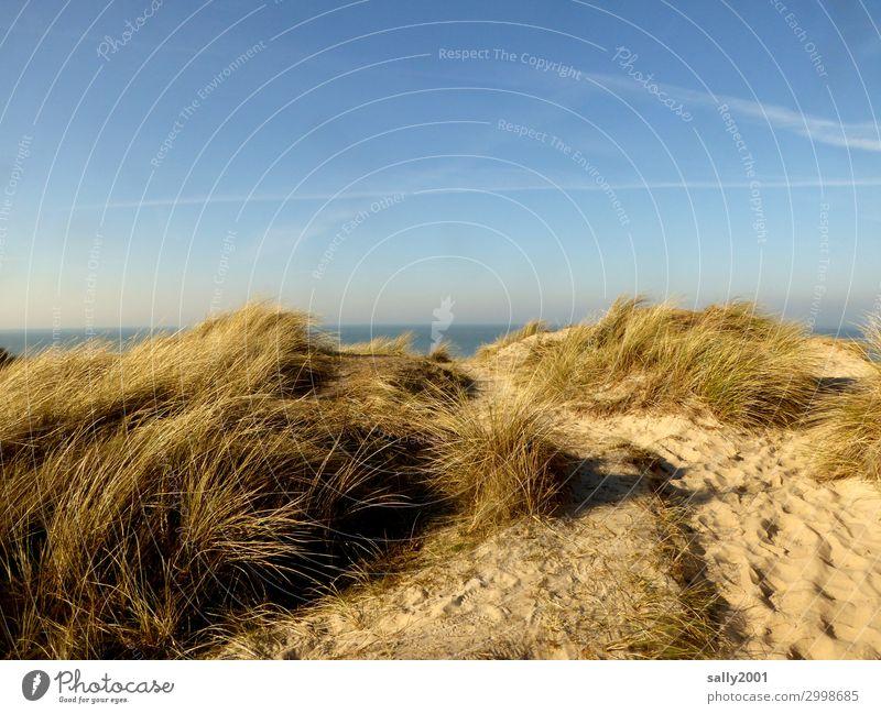 Nordseeblick... Gras Dünengras Meer Insel Stranddüne Ferne maritim Freiheit Horizont Umweltschutz Ferien & Urlaub & Reisen Sand Wind Übergang Farbfoto