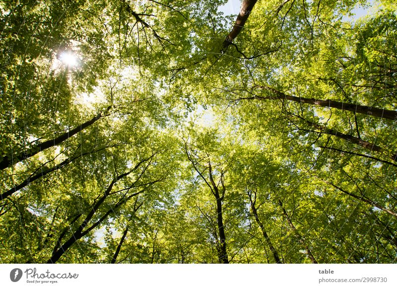 Earth Overshoot Day Natur Sommer Pflanze grün Landschaft Baum Erholung ruhig Wald Gesundheit Holz Umwelt Frühling Freiheit Ausflug wandern