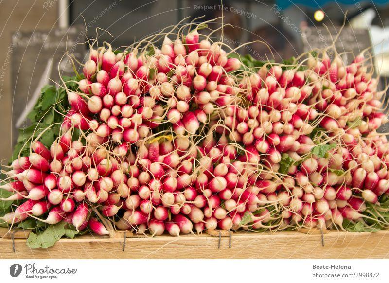 Gesunde Ernährung Natur weiß rot Gesundheit Lebensmittel Essen frisch genießen kaufen Gemüse Landwirtschaft Scharfer Geschmack Ernte Bioprodukte