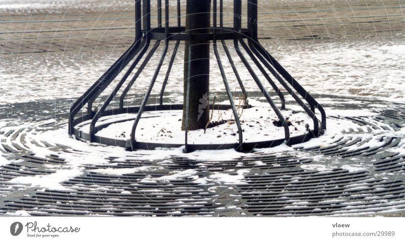 Kalte Kreise Baum Gitter Winter kalt Baumstamm Frost Schnee