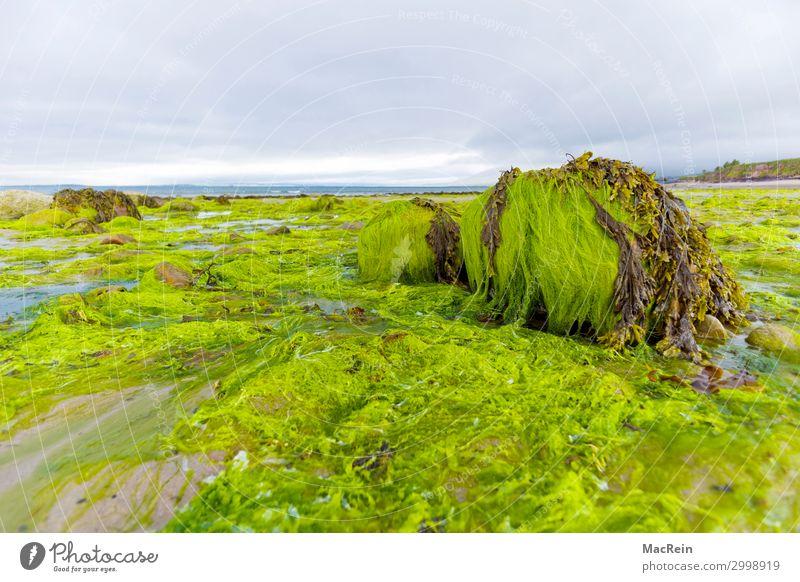 Strand von Witherocks Beach Erholung Tourismus Sommer Meer Landschaft Pflanze Sand Wasser Wolken Felsen Küste See Stein grün Algen Atlantik Ebbe Nordirland