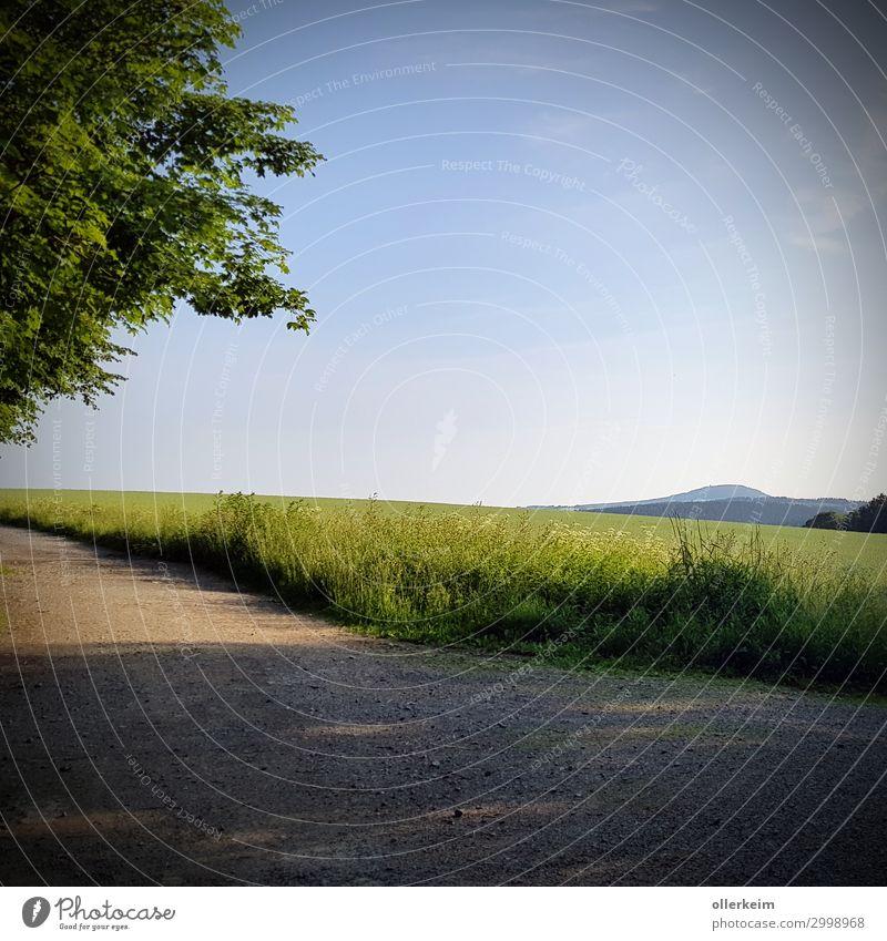 """der """"kleine"""" Pöhlberg Umwelt Natur Landschaft Himmel Wolkenloser Himmel Sommer Wetter Schönes Wetter Pflanze Baum Gras Grünpflanze Wiese Feld Hügel Blühend Duft"""