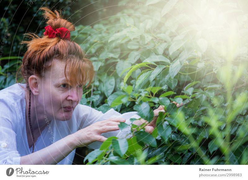 Eine neugierige Frau versteckt sich hinter Büschen und beobachtet Neugier beobachten Nachbarin Tarnung Spion ermitteln Spitzel bespitzeln Porträt Garten Park