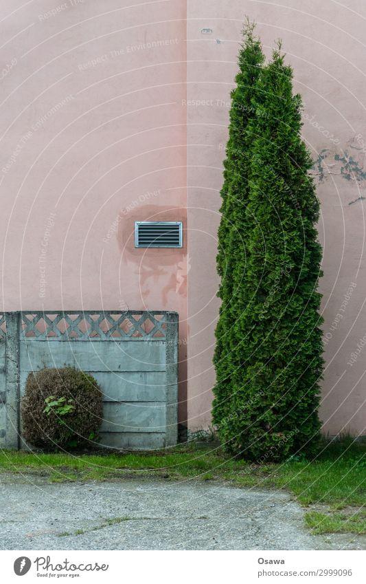 ungleiches Paar Haus Dekoration & Verzierung Mauer Wand Fassade Beton grau grün rosa Kies Buchsbaum Lebensbaum Verschiedenheit paarweise Fertigteil