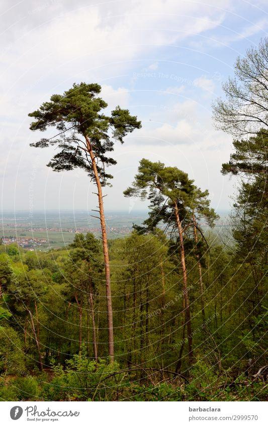 In der Pfalz Ferien & Urlaub & Reisen Ausflug wandern Natur Landschaft Pflanze Urelemente Himmel Wolken Baum Wald Pfälzerwald Rheinland-Pfalz Dorf Kleinstadt