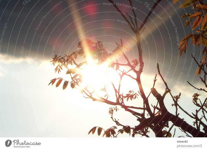 Sonne in Kleineutersdorf 1 Baum Blatt Natur Wolken