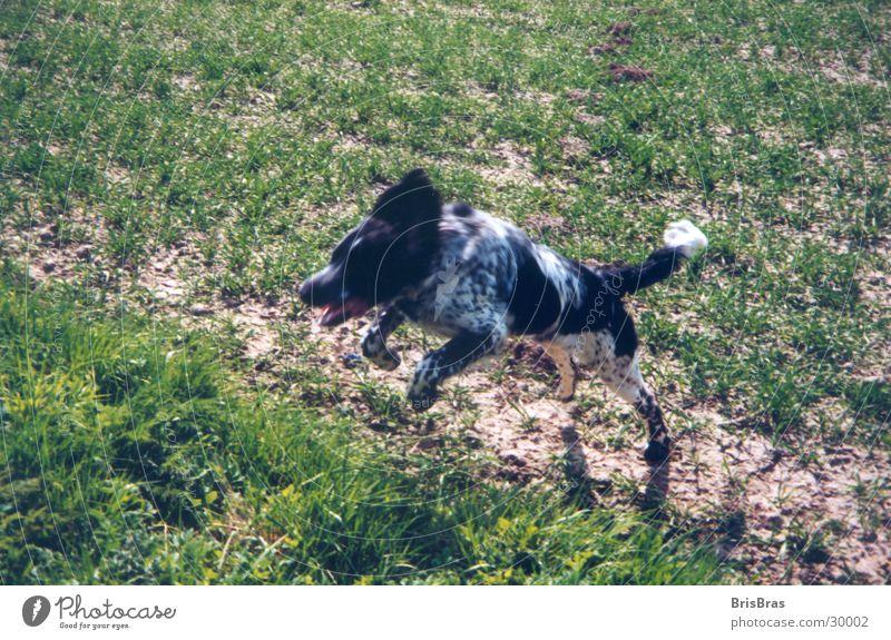 Hunter unterwegs Frühling Hund springen grün Freizeit & Hobby Spielen Bewegung Freiheit Außenaufnahme