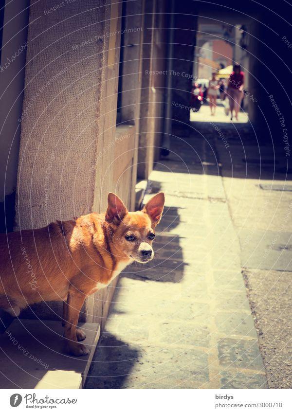 Türsteher Häusliches Leben Mensch Schönes Wetter Altstadt bevölkert Haus Gasse Fußweg Hund 1 Tier beobachten gehen Blick authentisch Freundlichkeit lustig