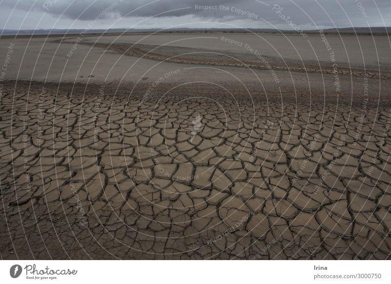Dürre Natur Landschaft Umwelt Sand Erde Klima Wandel & Veränderung bedrohlich Urelemente Zukunftsangst Wüste Umweltschutz Verzweiflung nachhaltig Sorge