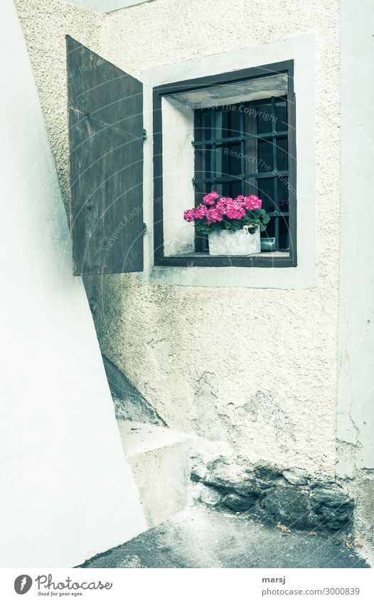 In einer Gebäudeecke ist ein kleines, vergittertes Fenster. Mit Blumen als Dekoration. Gemäuer altertümlich rustikal Fensterladen Ecke Blumenkiste Farbfoto