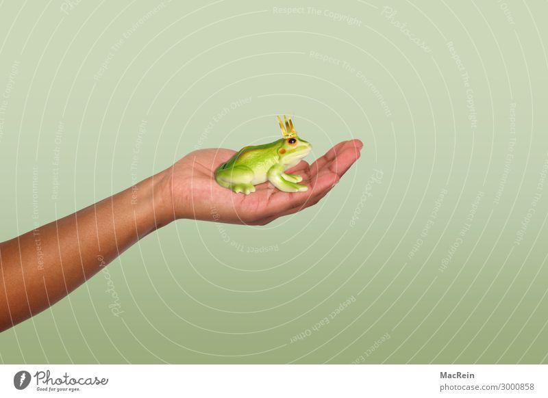 Froschkönig Glück Mädchen Frau Erwachsene Hand Tier Zeichen Küssen Liebe grün Gefühle Wunsch Prinzessin Märchen krone König Symbole & Metaphern Traumprinz