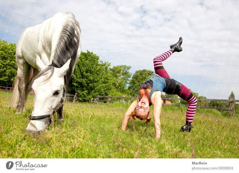 Pippi Langstrumpf Reiten Mensch feminin Junge Frau Jugendliche 30-45 Jahre Erwachsene Kunst Künstler Zirkus Veranstaltung Show Tier Bekleidung Strümpfe