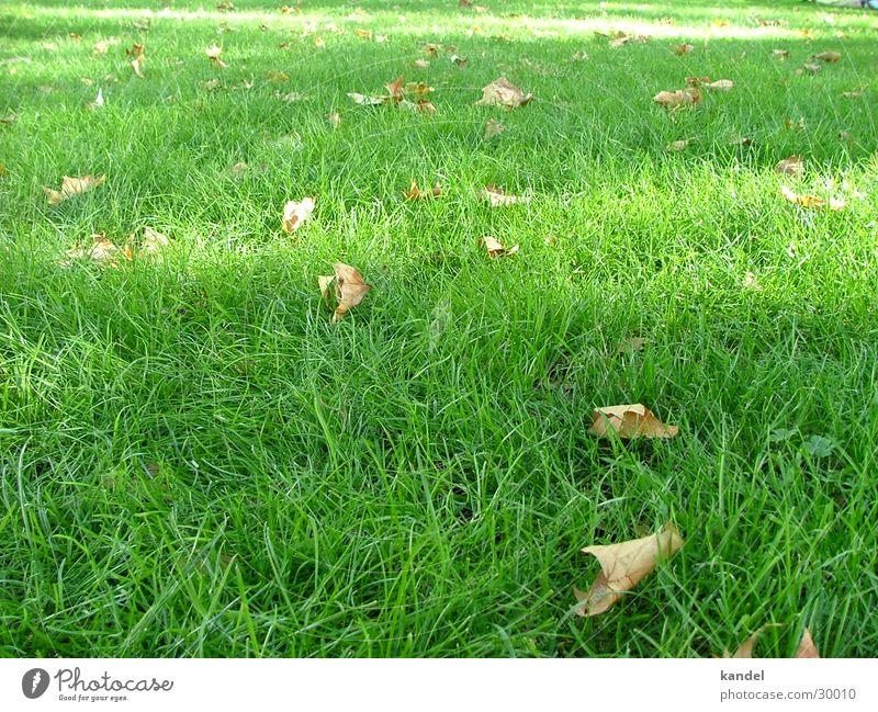 Fünf vor Herbst Gras saftig grün braun Licht Wiese Blatt Rasen Schatten Natur