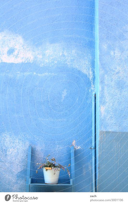 Isolation | Allein im Blau Pflanze Blume Grünpflanze Topfpflanze Insel Venedig Burano Haus Mauer Wand Fassade Beton alt blau Italien Farbfoto Außenaufnahme