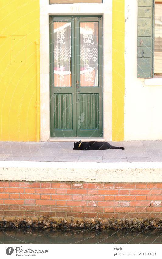gelb | grün Häusliches Leben Haus Venedig Burano Italien Fischerdorf Altstadt Mauer Wand Fassade Fenster Tür Holz Hauskatze Tier Haustier Fensterladen Farbfoto