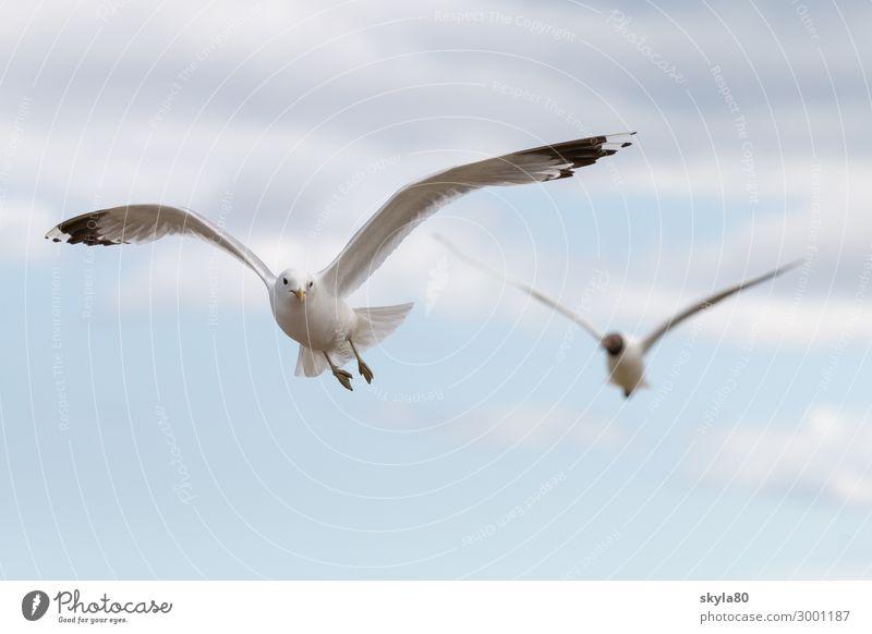 Vogelfrei Luft Himmel Wolken Wildtier Flügel Tiergruppe fliegen Unendlichkeit Neugier Tierliebe Luftaufnahme Tag Sonnenlicht Sonnenstrahlen Möwe Freiheit Natur