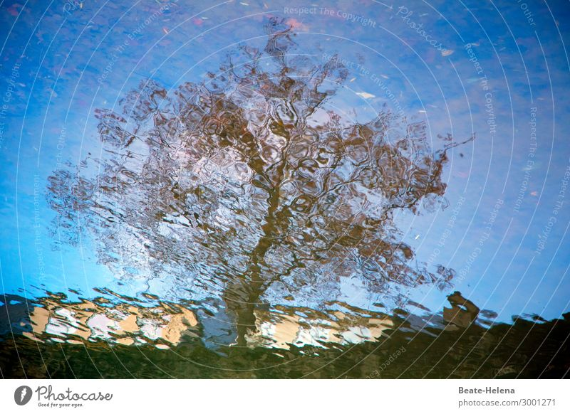 unscharf | Natürlich Erholung ruhig Meditation Freizeit & Hobby wandern Baum Wellen Seeufer Teich beobachten Bewegung entdecken genießen leuchten Liebe Blick