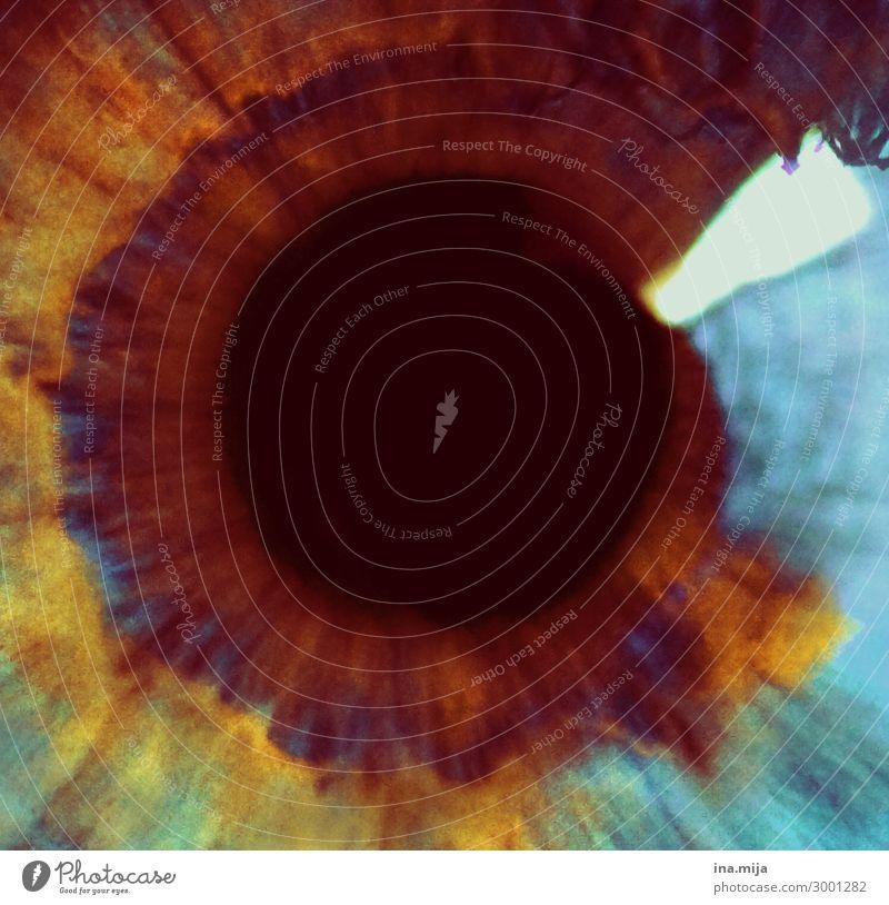 . Mensch Auge Augenheilkunde Augenfarbe Augenzeuge Pupille Regenbogenhaut braunes Auge blau nah Nahaufnahme Farbfoto mehrfarbig Textfreiraum links