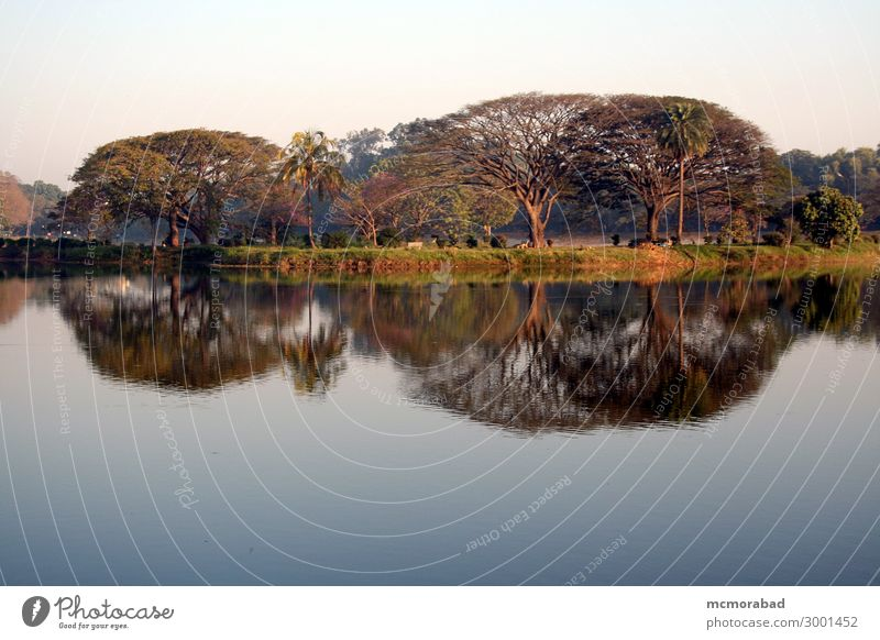 Spiegelbild im Morgenlicht Insel Baum Teich See ästhetisch schön blau grün friedlich Gelassenheit Horizont Baumumhang Inselchen ruhig Windstille Wasser