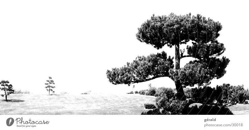Schwart & Weiß Natur 3 weiß Baum Gras Garten grau Rasen Asien Hügel Japan