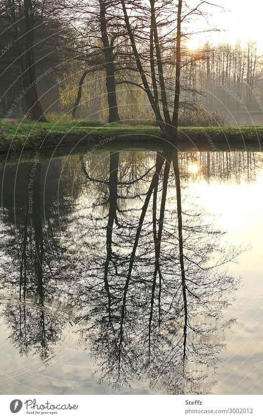 luftig | gespiegelt Natur schön Wasser Landschaft Baum ruhig Herbst gelb Umwelt natürlich See braun Stimmung Wetter Luft Seeufer