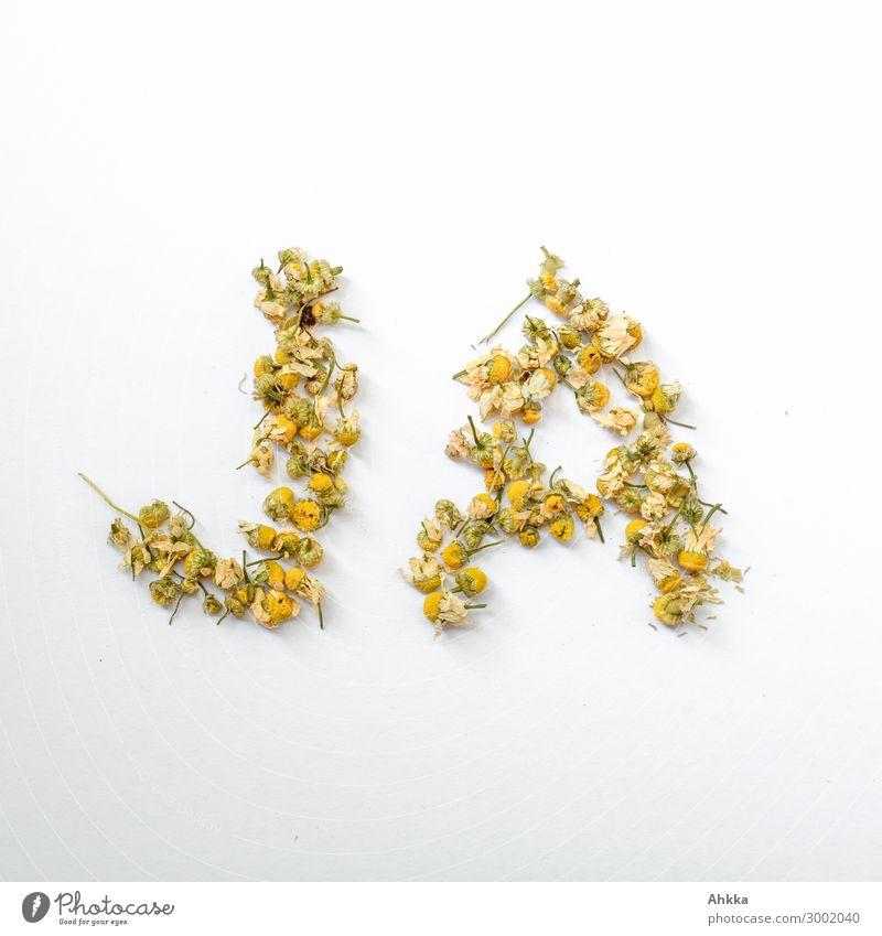 Ja Blüte Kamillenblüten Teleskop Schriftzeichen schön positiv gelb weiß Freude Glück Optimismus Einigkeit Sympathie Freundschaft Zusammensein Liebe Verliebtheit