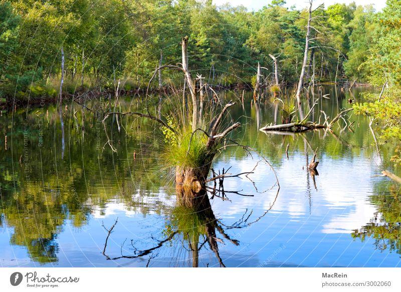 Moorlandschaft Umwelt Natur Landschaft Herbst Gras Sumpf grün Europa Heide Hochmoor Naturschutzgebiet Niedersachsen Torfmoor Moorsee Wasser Baum Farbfoto
