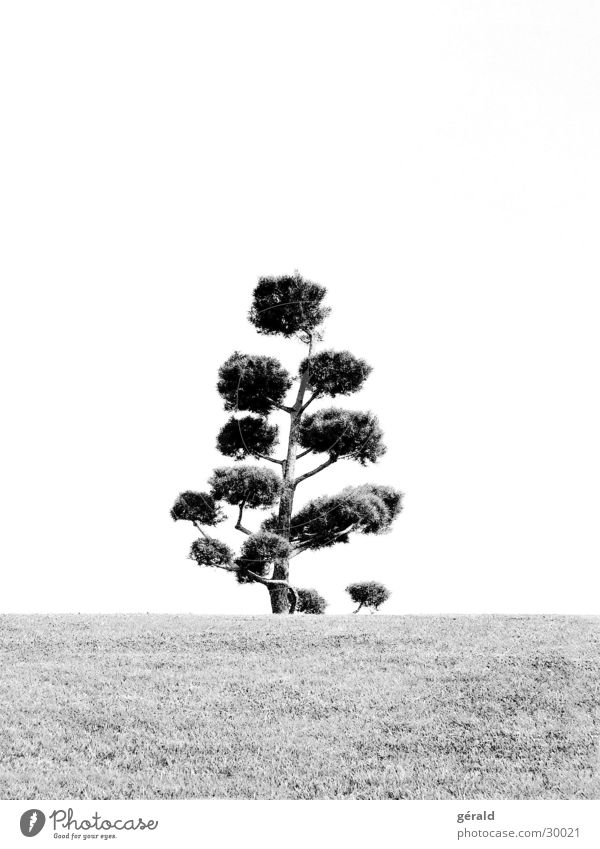 Schwart & Weiß Natur 2 Baum Hügel Gras weiß grau Rasen Garten Japan