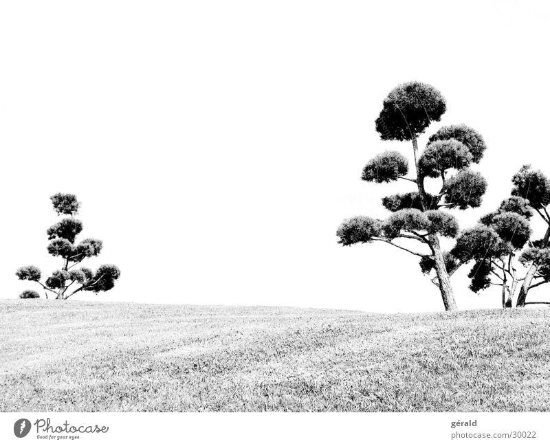 Schwart & Weiß natur 1 Baum Hügel Gras weiß grau Rasen Garten Japan