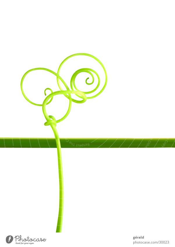 Naturgrafik 6 Natur weiß grün Pflanze rot Stengel Grafik u. Illustration