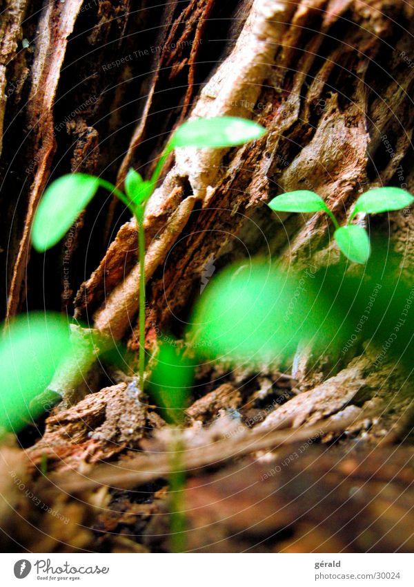 Little Natur Baum grün Pflanze braun Stengel Baumrinde