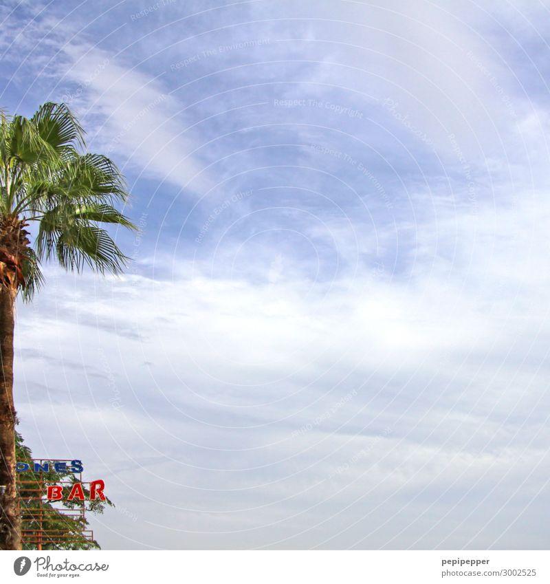 Schnittpflanze Ferien & Urlaub & Reisen Tourismus Ausflug Freiheit Sommer Sommerurlaub Strand Party Bar Cocktailbar Strandbar Himmel Wolken Pflanze Palme Küste