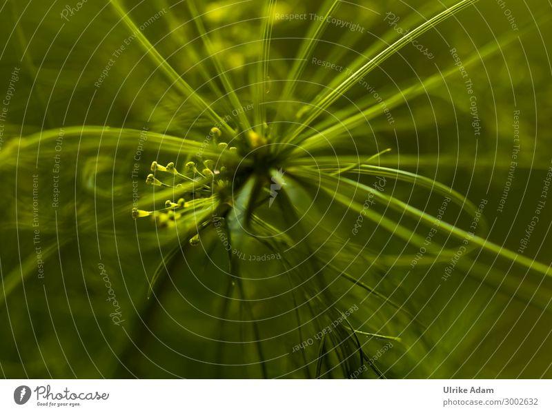 Grün - Linien der Natur Kräuter & Gewürze elegant Stil Design Alternativmedizin Gesunde Ernährung Wellness harmonisch Erholung Meditation Kur Spa Tapete Umwelt