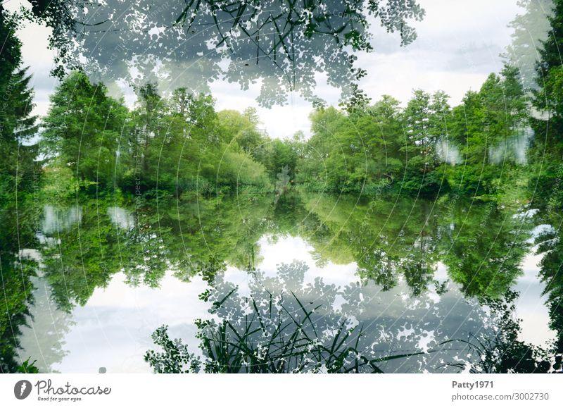 See(len)spiegel Umwelt Natur Landschaft Pflanze Baum Wald Seeufer natürlich grün weiß ruhig Zufriedenheit geheimnisvoll Surrealismus Symmetrie Doppelbelichtung